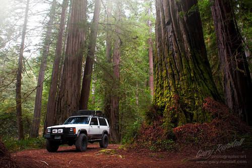 california jeep redwoods cherokee bigtrees crescentcity ppv jedediahsmith jedsmith howlandhillroad dsc69154