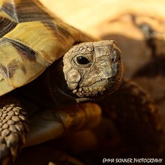 Beautiful Squirt #tortoisetweet #tortoise