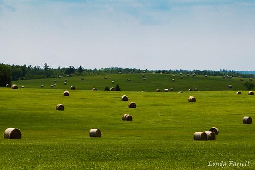 2016 24105 canada canon canondslr canoneos7dmarkii july novascotia outdoor summer hay field grass sunny rollinghills haybales rural farming landscape