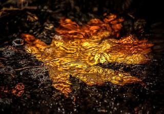 The Season of Fallen Leaves | by Natalia Medd