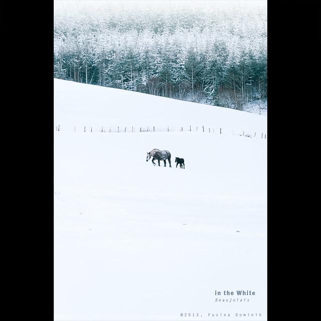 In the white | Beaujolais