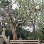Firefox et ses copains les pandas