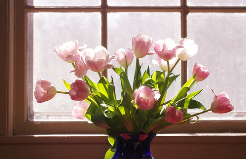 tulips at the window | by Muffet