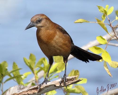 birds canon florida ngc 7d naturesharmony mygearandme 100x400mmusml