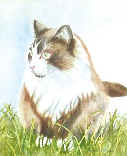 Chi_cat_4in | by adine.rotman