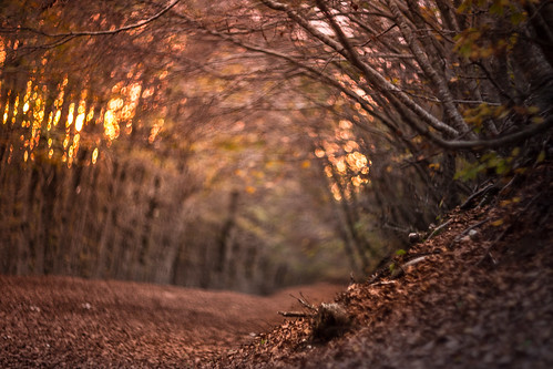 autumn sunset red fall leaves gold golden path monte monti simbruini autore