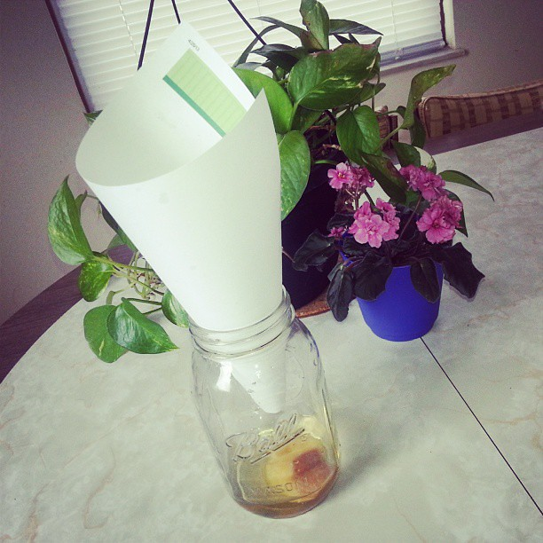 Super easy fruit fly trap! Vinegar, a piece of ripe fruit, a mason jar, and a piece of paper folded into a cone. Worked within 10 minutes...