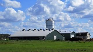 Haasen Farms Limited