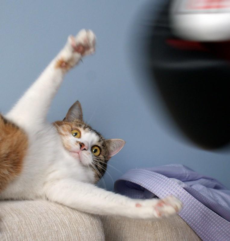 Crazy cat :D