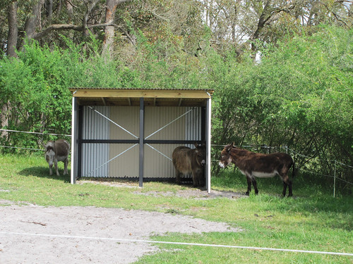 Donkey Housewarming Party – Red Moon Sanctuary, Redmond Western Australia