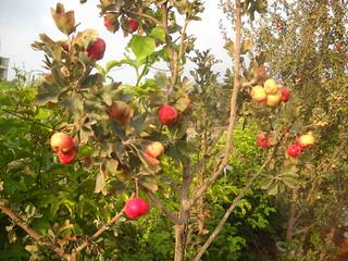 Zaarour Mayhow Berry Fruits Aug 7, 2016 (9) | by toutberryfarms
