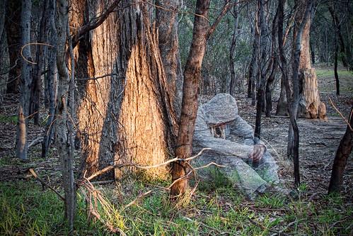 ghost selfportraits australia greenvale woodlandshistoricpark