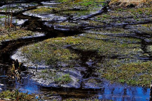 ontario canada stream walk bog stouffville yorkregionalforest maywalk nikond7000
