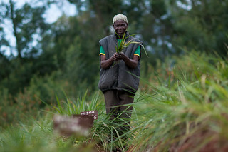 Forages in Tanzania: making trade-offs   by CIAT International Center for Tropical Agriculture