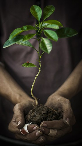 plant tree hands earth roots save soil future ladybug environment 365 365days