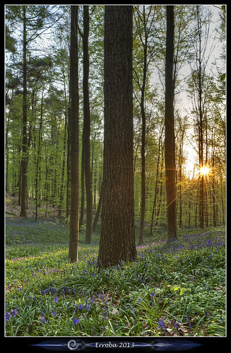 flowers trees light sun green grass forest sunrise canon spring belgium belgique belgië erlend halle hallerbos hyacints erroba robaye 5dmarkiii