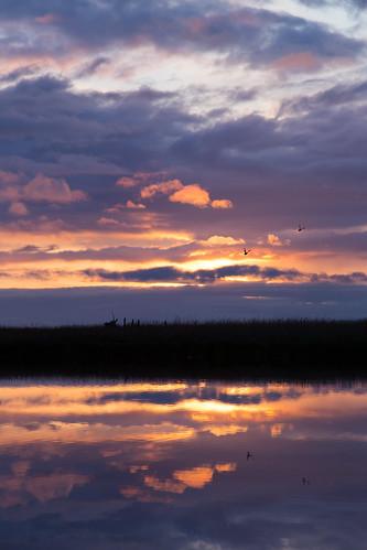 sunset pond sequim dungeness