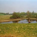 Gewässer im Deichbinnenland der Walsumer Rheinaue