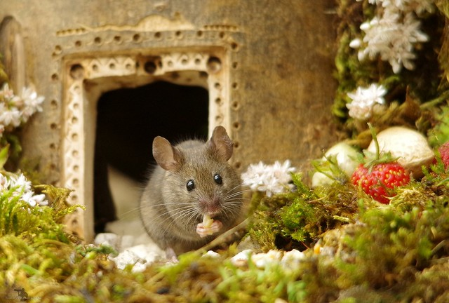 Mouse in a log house  (3)