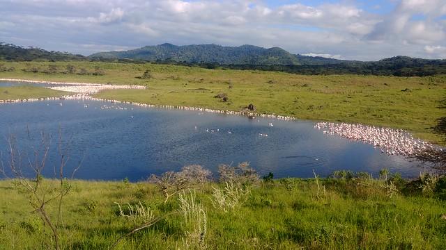 Flamingos - Arusha National Park