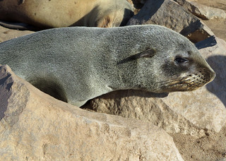 seals-namibia   by quirkytravelguy