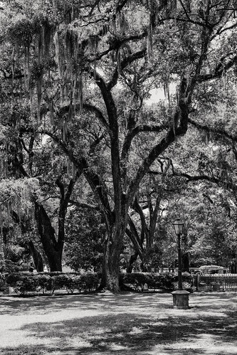 louisiana trees graceepiscopalchurch spanishmoss canon1dx bw shadows cemetery stfrancisville