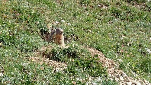 Marmotte | by benontherun.com