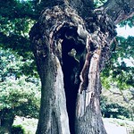 #ShotoniPhone #nature #photooftheday #instagood #naturephotography #photography #travel #beautiful #love #summer #picoftheday #photographer #travelphotography #naturelovers #arbre #tree #キッズファッション #モク #オシャレ