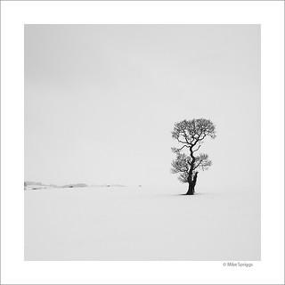 Maria's Tree
