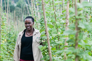 Bean diversity helps farmers tackle climate change | by CIAT International Center for Tropical Agriculture