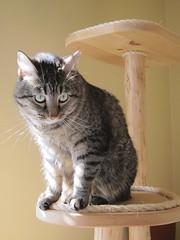 Mei, queen of the cat tower