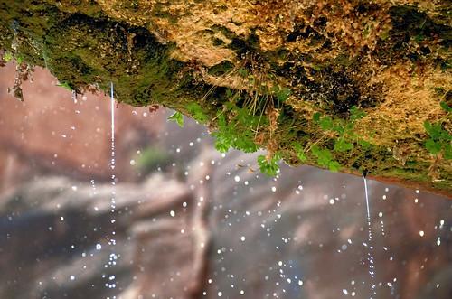 water utah rocks zionnationalpark canyons weepingrock hanginggardens hbw bokehwednesdays nikkor18300mm