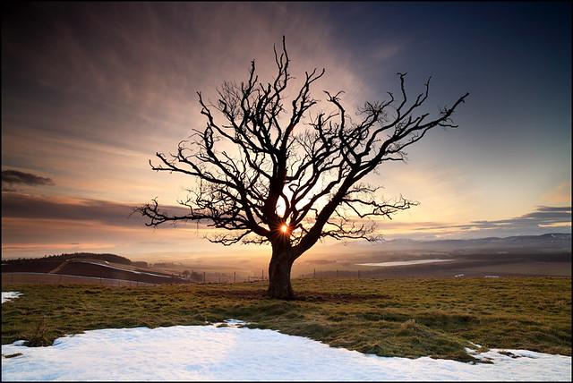 Beech Tree Strathmore