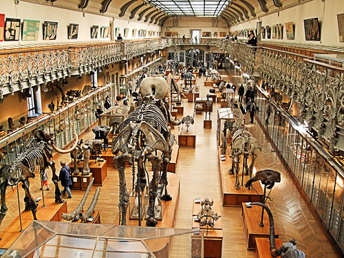 The Gallery of Paleontology - Paris. | by Jim Linwood