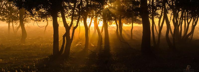 my fairytale forest