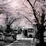 Ueda Sakura Hill