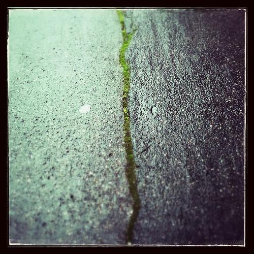 quand la nature reprend ses droits... ou la coulée verte | by akynou