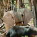 Elephant vs. Buffalo by houssamg