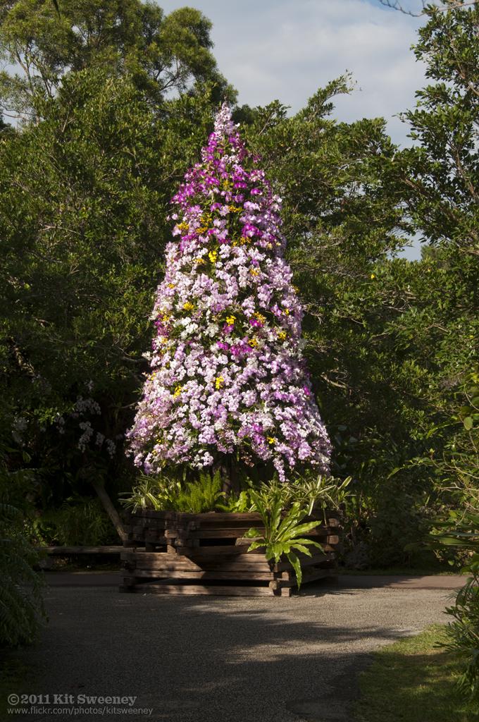 Orchid Christmas Tree.Orchid Christmas Tree Bios Park Okinawa Kit Flickr