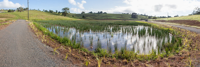 Southmost Wetland
