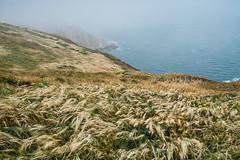 Photograph: Blowing Grass