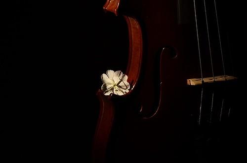 Violin - an album on Flickr