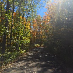 #foliage #autumn #maine #shadows  :heart:️:maple_leaf::fallen_leaf: