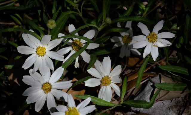 Hidden Wildflowers