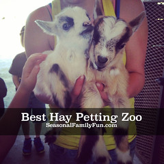 Best Hay Petting Zoo