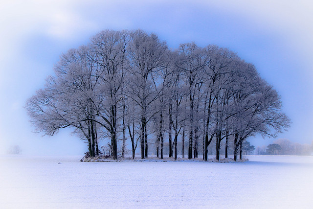 Blue Winter.