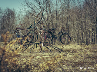 Bicycle Art | by makleen
