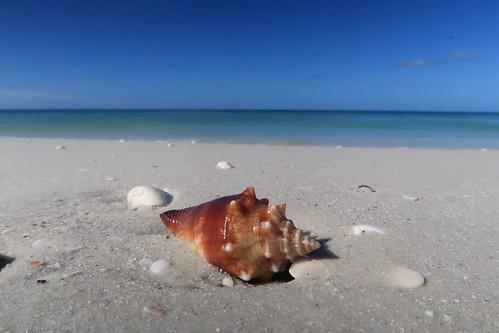 g7xmkii naples southwestflorida florida island shell conch beach keewaydin dof sand gulfofmexico