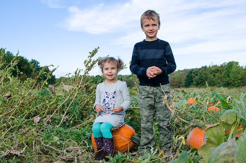20161008-Pumpkin-Picking-0524 | by auley