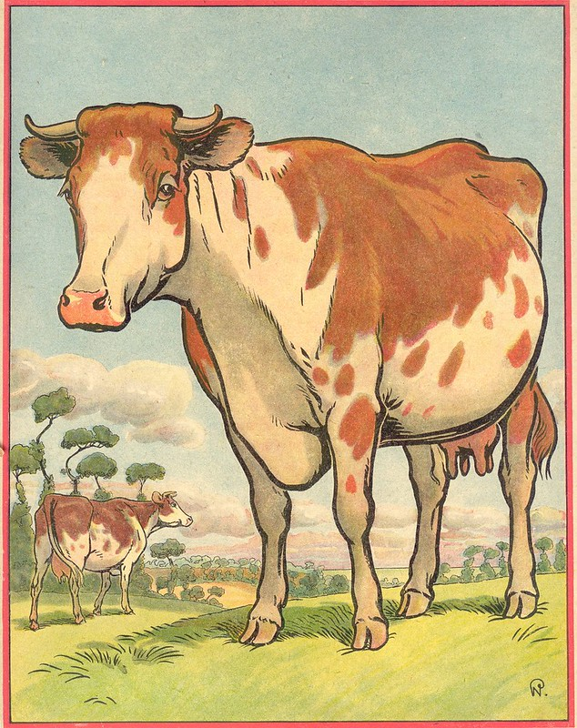 buff vache
